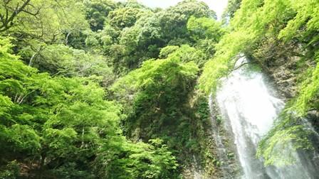 心理カウンセリング大阪・箕面 箕面の大滝