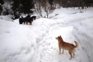 子犬と遊ぶ柴犬うみ