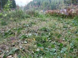 イノシシ被害の後の畑