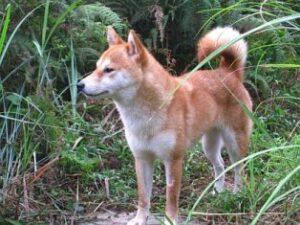 柴犬うみ、2010年8月